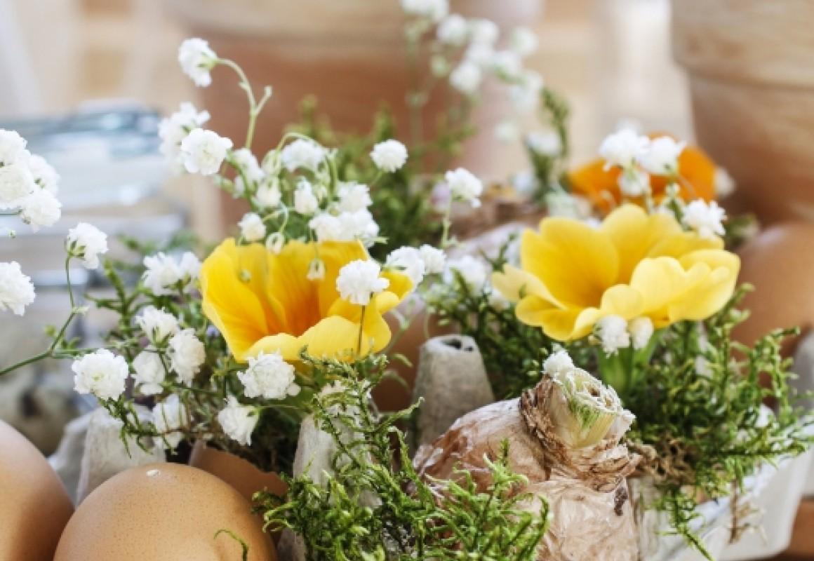 Natural egg carton arrangement