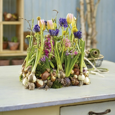 onions on a bed of moss
